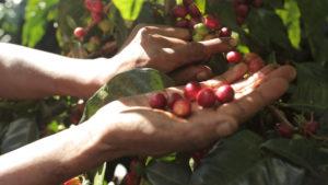 Menendez Family Coffee Farm